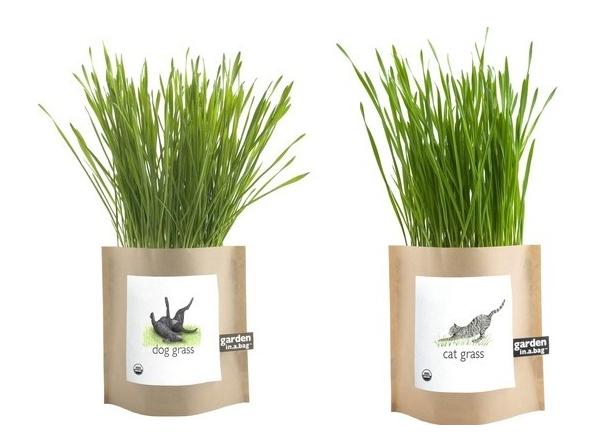 Pet Grass Garden In A Bag