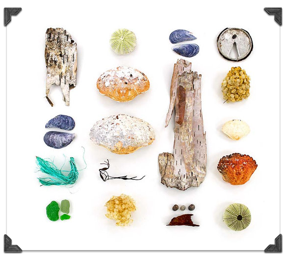 Quercus Design Beachcombing Series