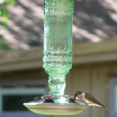 Hummingbird Antique Bottle Glass Feeder