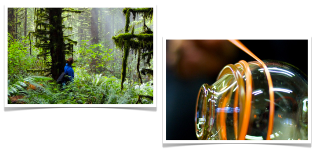 Breakaway Experiences Rainforest Tour and Glass Blowing