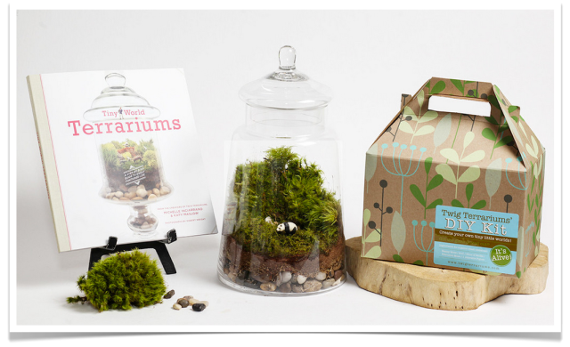 Twig Terrarium DIY Kit