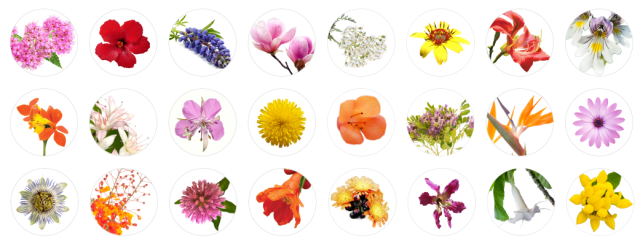 Lotus Wei Flowers