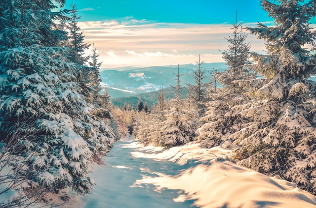 Winter mountain trail on a sunny day.